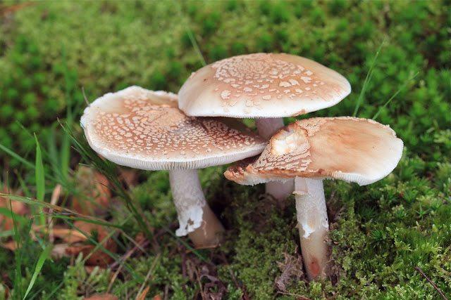 Mushrooms, ecology, death.