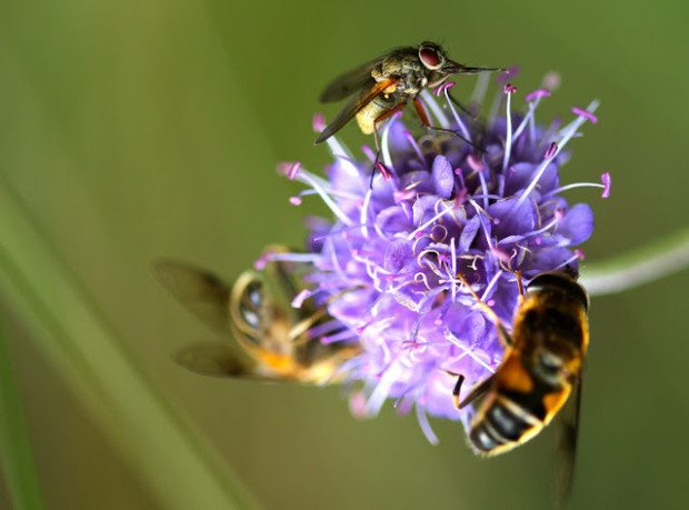 Busy bees, the hoverflies and us.