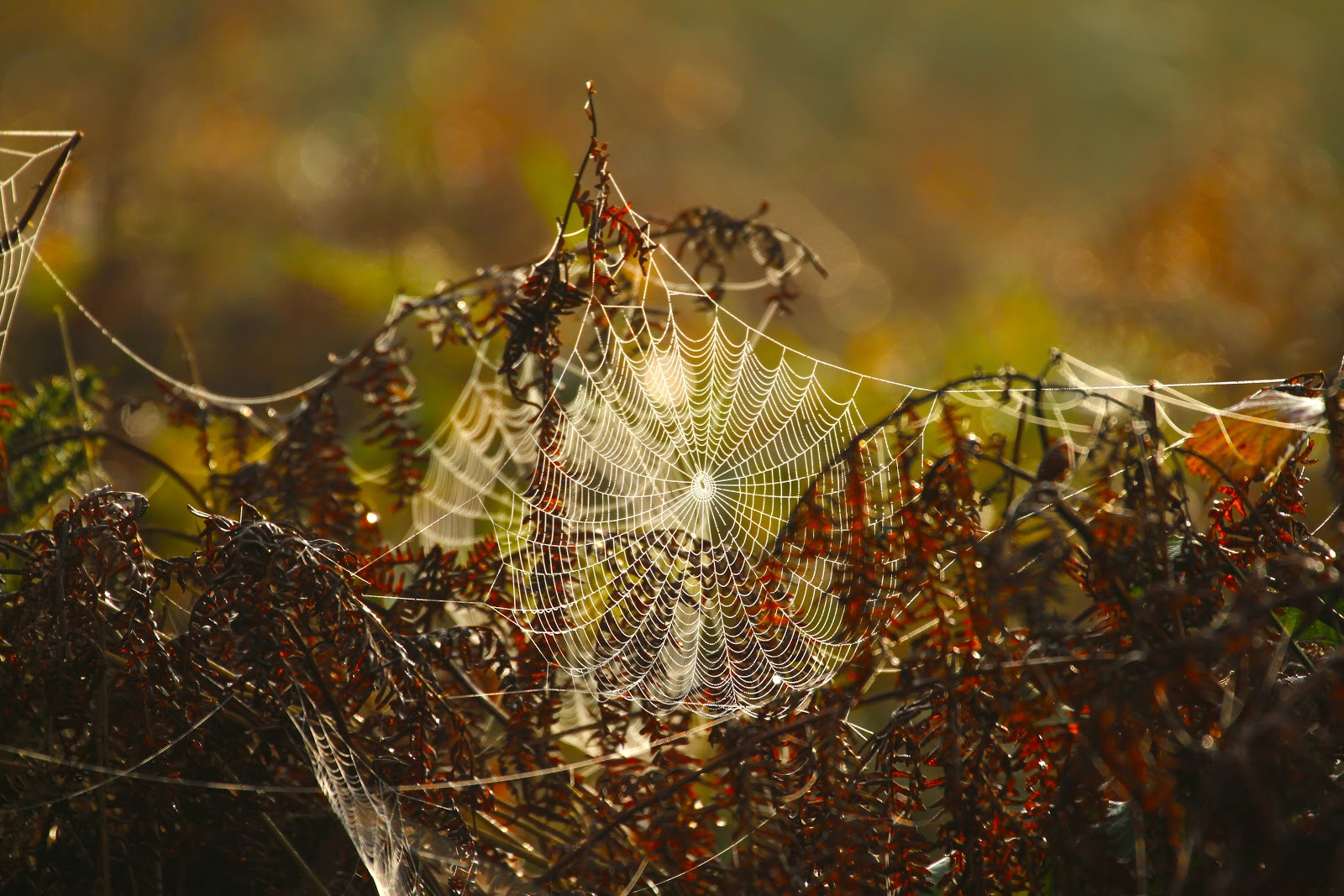 The beauty of the web……