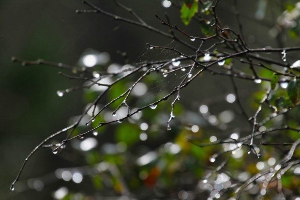 The cool balm of rain