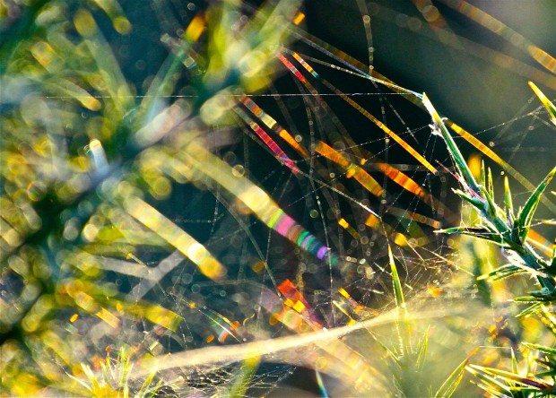 Faery creatures dancing in rainbows of dew