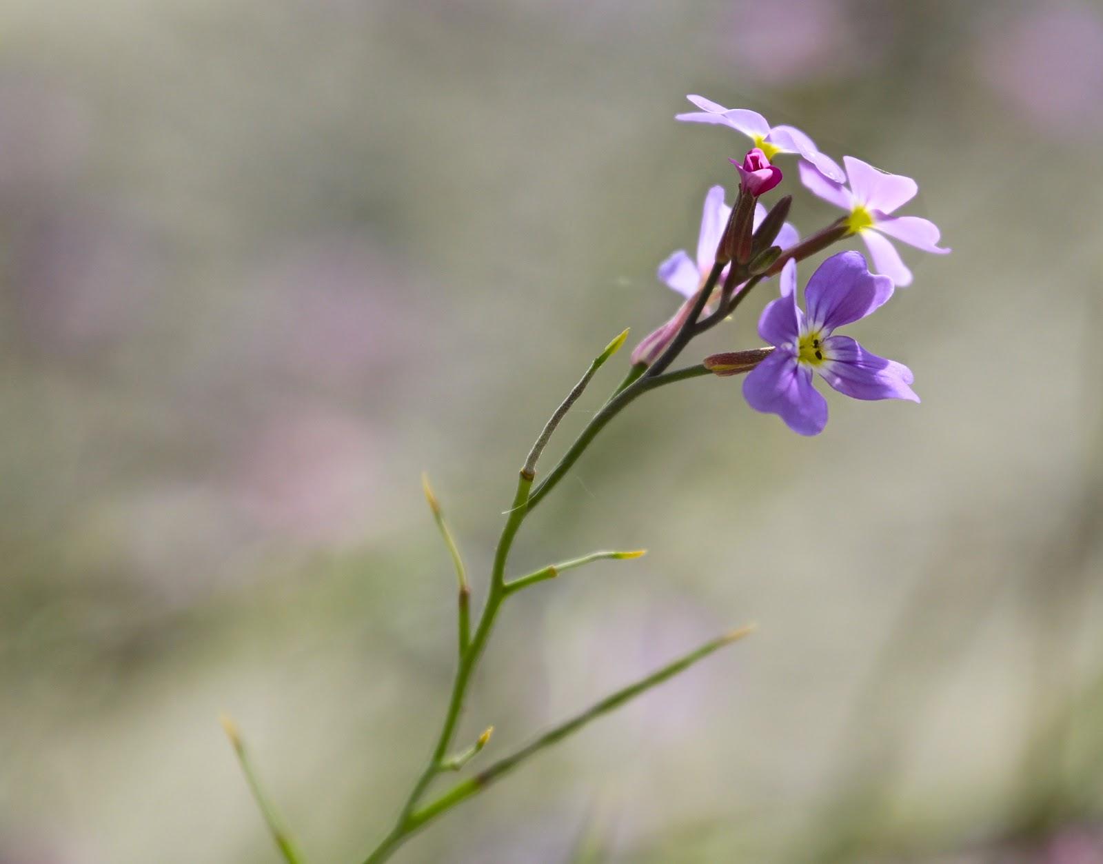 Wildflower walking in Greece #Pilgrimage ~ May