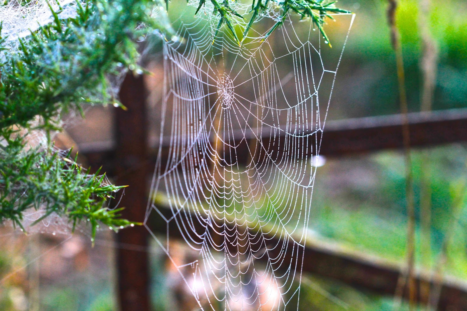Early morning web magic