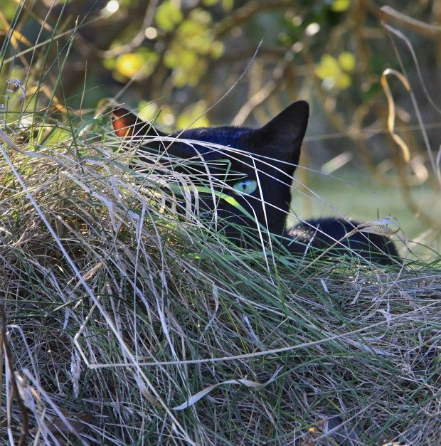 A black cat, another road trip and a resounding YES!