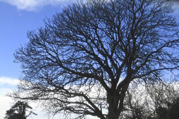 blue-sky-tree
