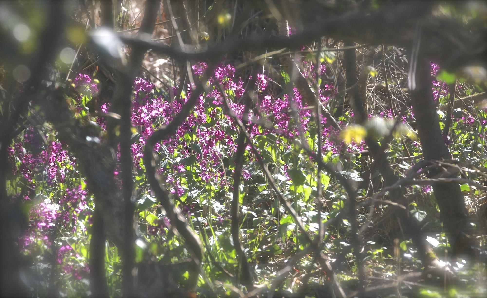 Spring in Ireland