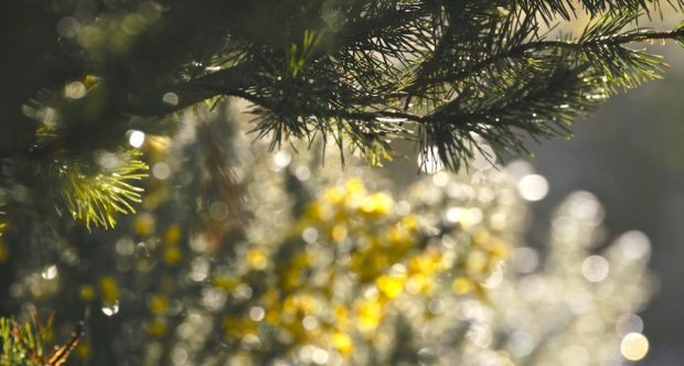 bokeh-in-the-gorse