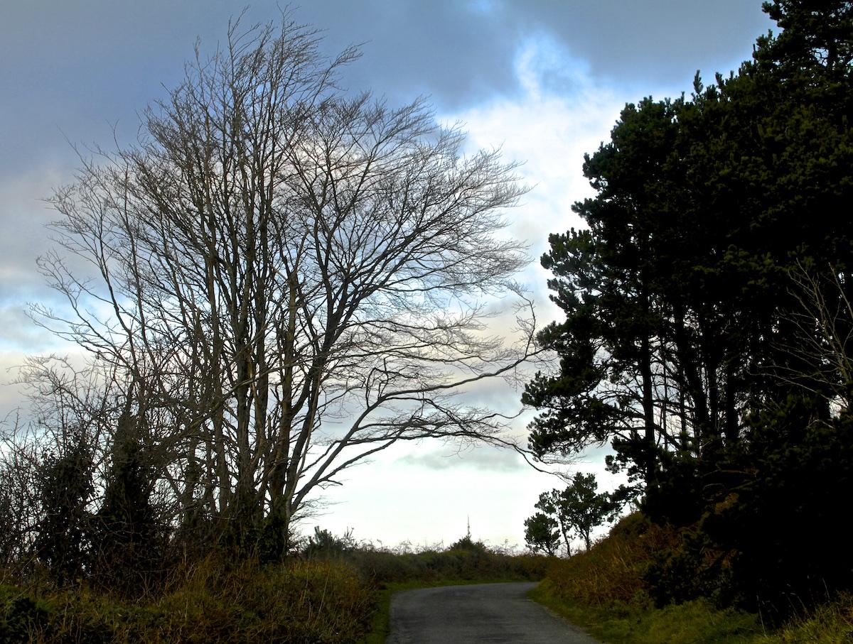 january-trees