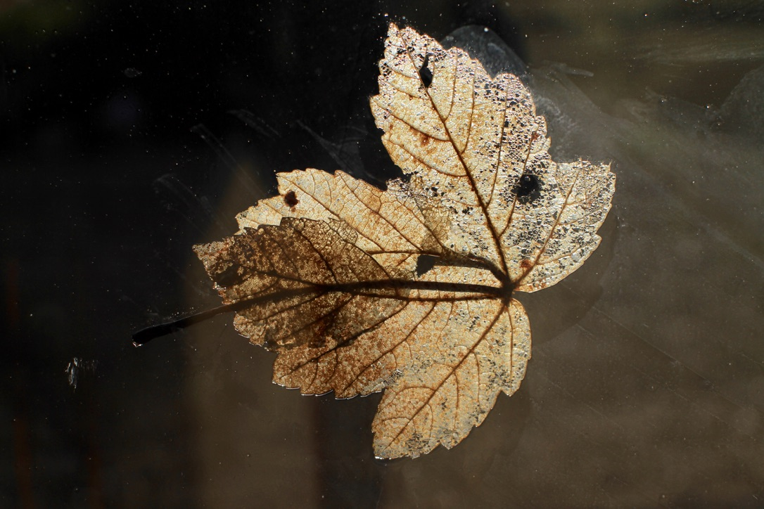 wabi-sabi leaf